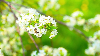spring flowers and small bee