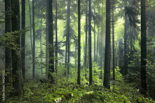 AluDibond Wald Mysterious dark forest