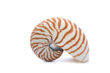 Nautillus shell on white background