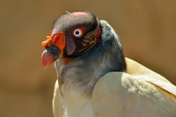 Eagle outdoor, close-up portrait