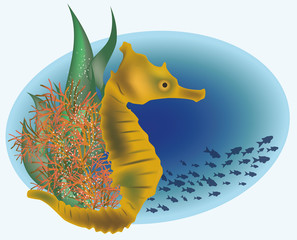 Marine life with sea horse, vector illustration