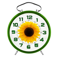 Green clock and sunflower