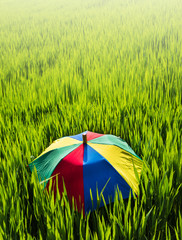 Colorful umbrella on the green grass.