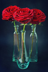 three beautiful red roses on a dark background .