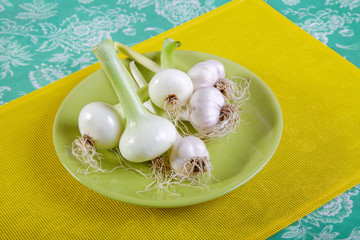 Onion and garlic on a plate