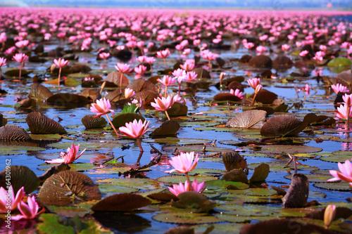 Poster Water planten Lotus