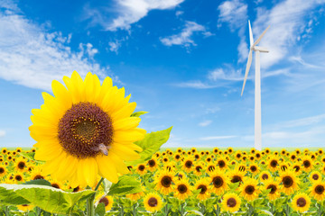 sunflowers field with wind turbine and blue sky