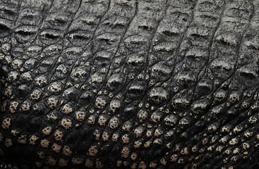 Crocodile skin, texture background.