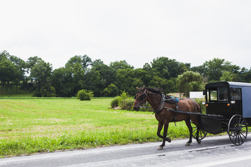horse and carriage in Amish Country