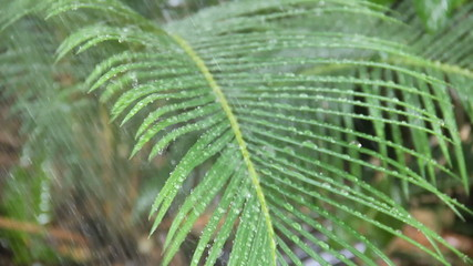 Water On Palm Frond
