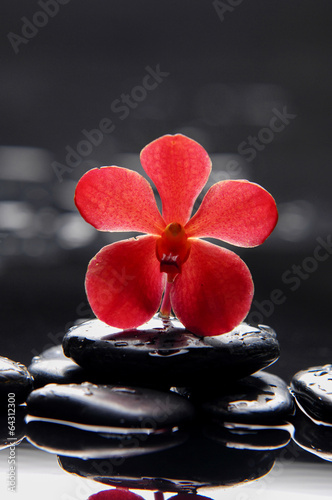 Poster Spa still life with red orchid on pebble