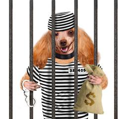 Dog in prison.