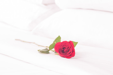 Red rose on the bed with pillows background