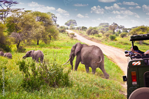 Canvas Afrika Elephants family on pasture in African savanna . Tanzania