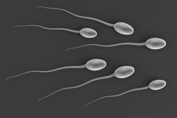 realistic 3d render of sperms