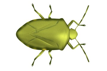 realistic 3d render of stink bug