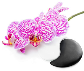 Spa still life of beautiful orchid flower and Yin-Yang stones is