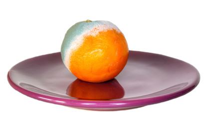 rotten orange on the plate