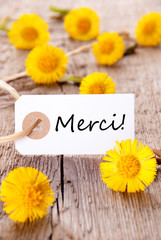 Yellow Flowers with Merci