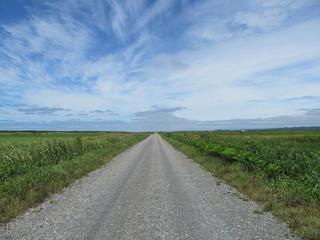 草原の一本道