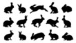 rabbit silhouettes - 64320380