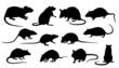rat silhouettes - 64320389