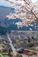 Sakura in Shirakawago Village Japan