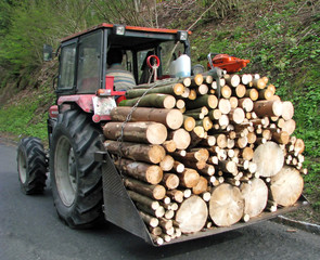tractor transport a full load of wood 2