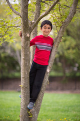 Outdoor Portrait of a little Boy on a Tree in Spring