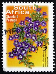 Postage stamp South Africa 2003 Karoo Violet, Perennial Plant