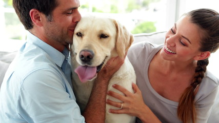 Laughing couple petting their labrador dog on the couch