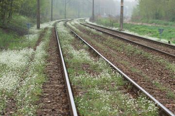 Tory kolejowe, wiosna, kwitnące białe kwiaty
