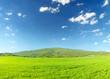 Grassland in summer time.