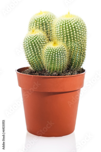 Foto op Canvas Cactus Cactus isolated on white background