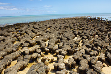 Stromatolites in west australia