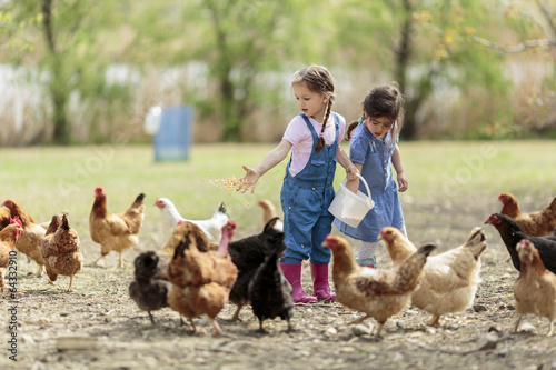 Two little girl feeding chickens - 64332910