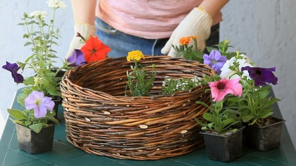 Female gardener arrange flowers to wicker basket