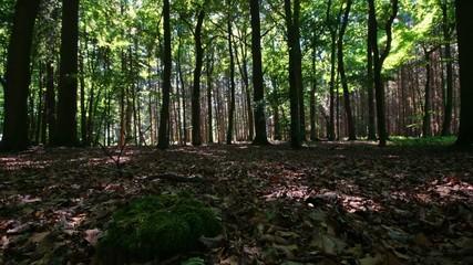 Wald Zeitraffer