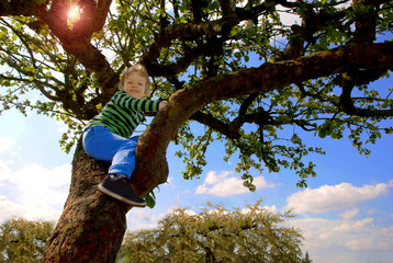 Boy on apple tree