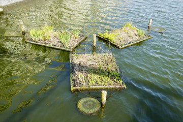 Places for nests on the canals of Amsterdam, the Netherlands