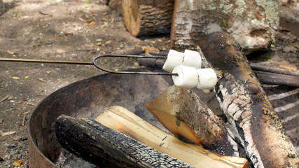 Marshmallows Roasting on a Campfire in the Afternoon
