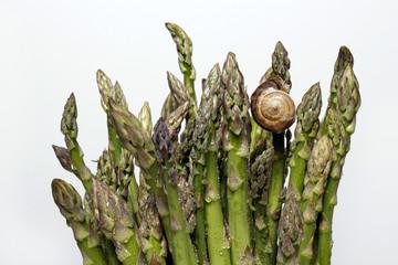 Green asparagus , espárragos verdes