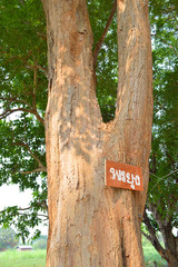 Siamese Rosewood