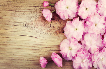 Cherry Blossom on Old Wooden Background. Sakura in Spring.