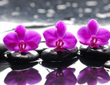 Fototapeta Kitchen - Three orchid flower and stones with reflection in water drops © Mee Ting