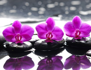 Three orchid flower and stones with reflection in water drops