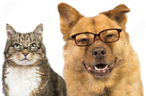 Fotobehang Dragen Dog and cat wearing glasses
