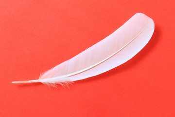 White feather on red paper