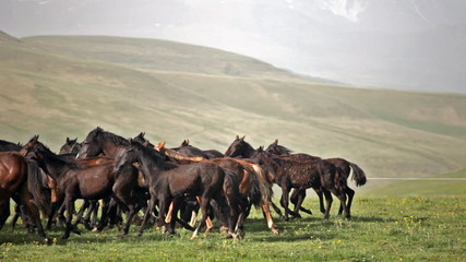 Herd of horses is grazed on a mountain pasture