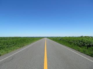 草原のなかの道